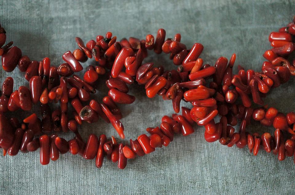 赤珊瑚 画像